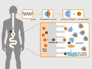 Подобрен процес на усвояване на куркумин
